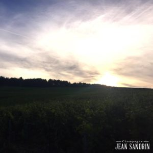 Celles sur Ource Champagne Jean Sandrin